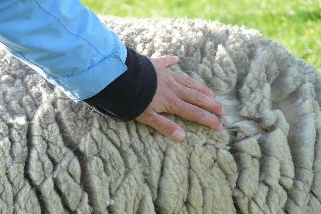 fibre de mouton comme isolant thermique