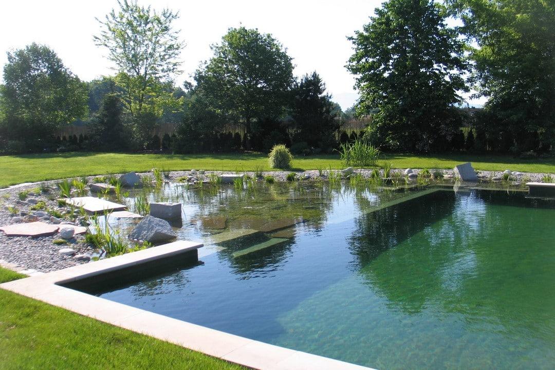 bassin et plantes d'une piscine naturelle